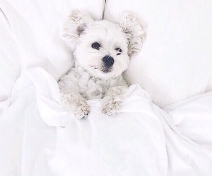 dog, white, and cute image