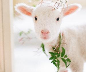 lamb, cute, and spring image