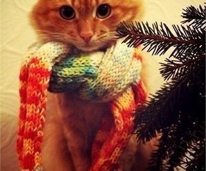 cat, scarf, and winter image