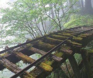 nature, forest, and abandoned image