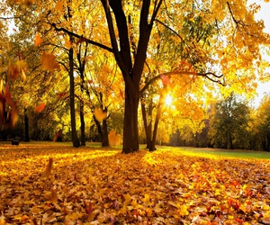 autumn, leaves, and morning image