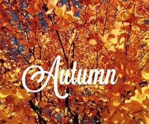 autumn, fall, and leafs image