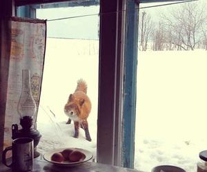 fox, winter, and snow image