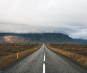 autumn, road, and cat image