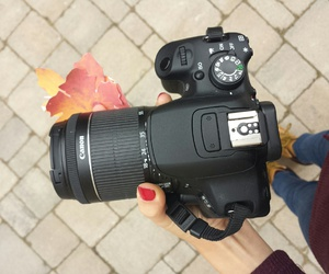 camera, fall, and leaves image