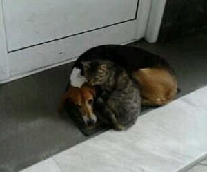 cat and dog, friendship, and cat+dog=love image