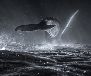 black and white and whale image
