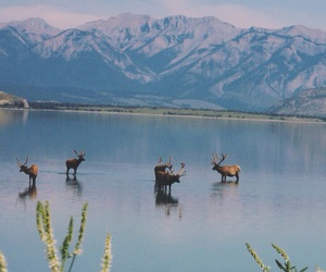 canada, chill, and natural image