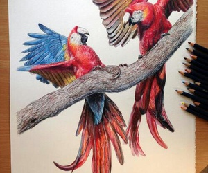 drawing, art, and parrot image