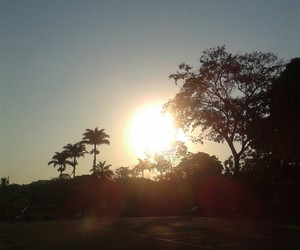 sun lovers image