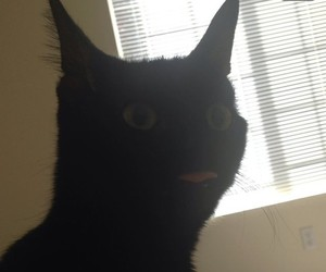 cat, funny, and lol image