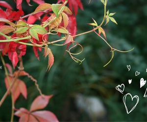 autumn, hearts, and fall image