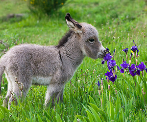 animal, cute, and donkey image