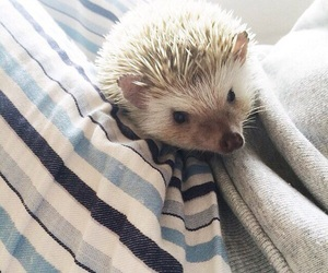 cuties, hedgehogs, and mimipets image