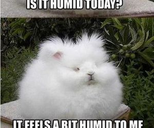 funny, humid, and lol image