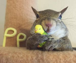 squirrel, baby animals, and birds image