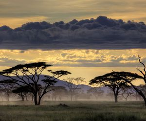 tree, africa, and landscape image