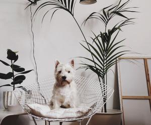 dog and plants image