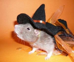 animals, Halloween, and pets image