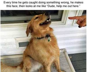 funny, dog, and animal image
