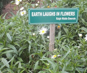 flowers, green, and earth image