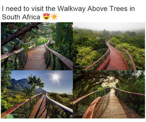 cape town, south africa, and treetop canopy walkway image