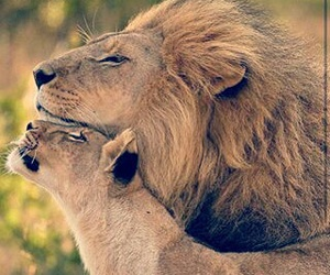 animals, couple, and awesome image
