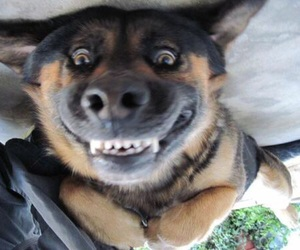 dog, smile, and funny image
