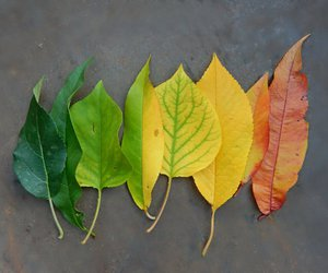 autumn, color, and colors image