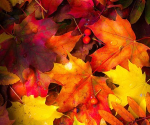 wallpaper, autumn, and background image