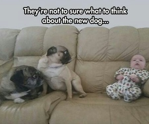 baby, dogs, and funny image