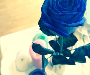 blue rose, candles, and roses image