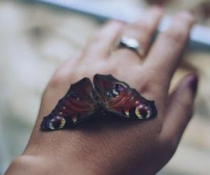 butterfly, magic, and cute image