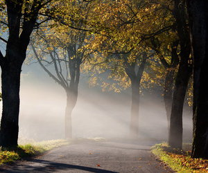 autumn, fall, and forests image