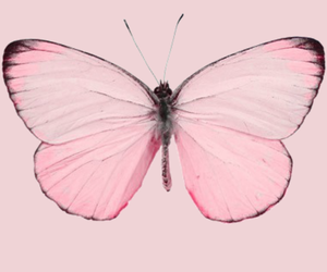 beautiful, cute, and butterfly image