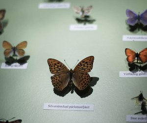butterfly, vintage, and gry sol image