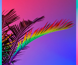pink, plants, and rainbow image