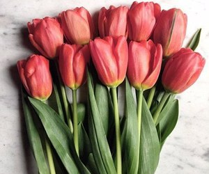 flowers, tulips, and red image