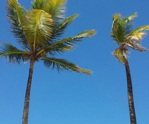 beach, blue, and coconut trees image