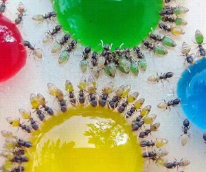 animals, insect, and colors image