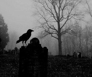 dark, crow, and raven image