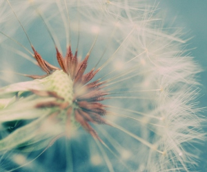 dandelion, blue, and pretty image