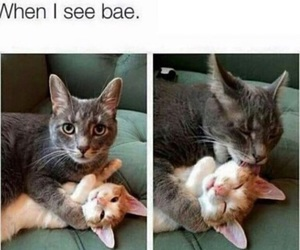 bae, cats, and kiss image