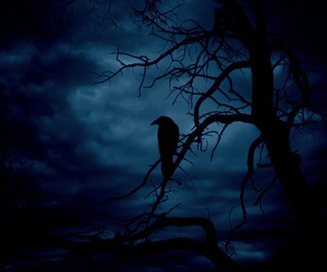 forest, bird, and Darkness image