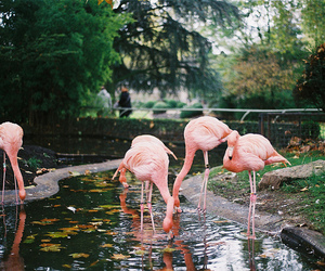 flamingo, animal, and indie image