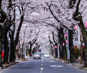 asia, cherry blossom, and japan image