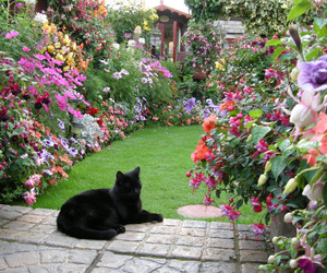 cat, flowers, and aesthetic image