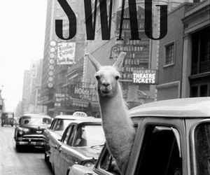 swag, lama, and black and white image
