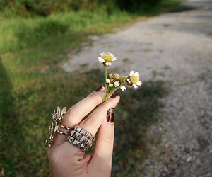 daisy, nails, and flower image