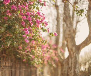flowers, nature, and outdoors image